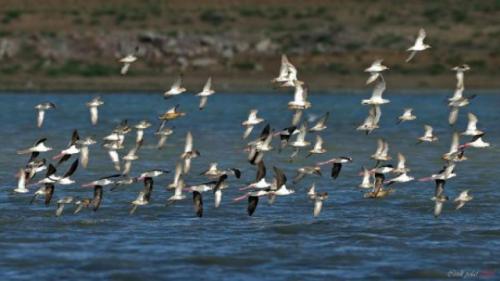 Manyas Kuş Cenneti Fotoğrafları