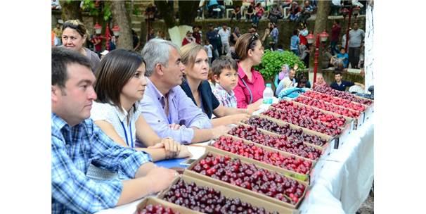 İzmir Kemalpaşa Kiraz Festivali